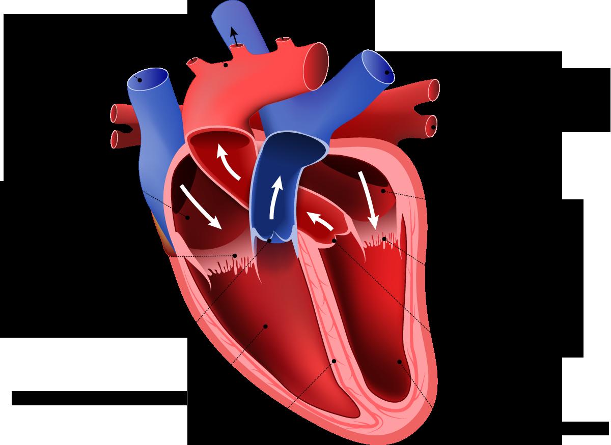 ACRC Varese il cuore